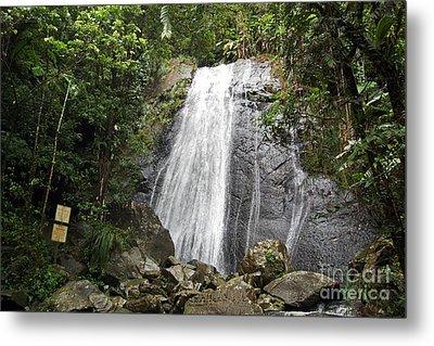 La Coca Falls El Yunque National Rainforest Puerto Rico Print Metal Print by Shawn O'Brien