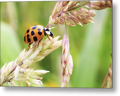 Lady Bug On A Warm Summer Day Metal Print by Andrew Pacheco