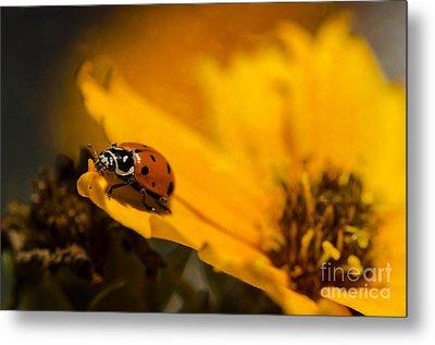 Ladybug Metal Print by Nicole Markmann Nelson