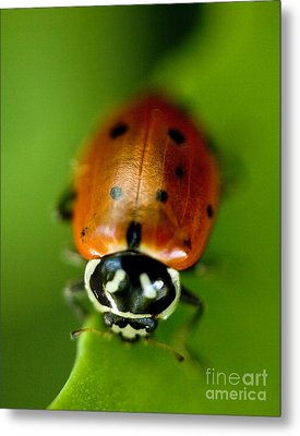 Ladybug On Green Metal Print by Iris Richardson