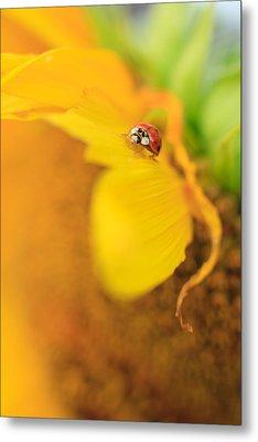 Ladybug Metal Print by Rebecca Skinner