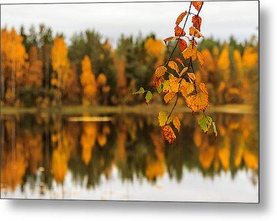 Lake Reflections Of Fall Foliage  Metal Print by Aldona Pivoriene