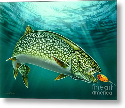 Lake Trout And Spoon Metal Print by Jon Q Wright