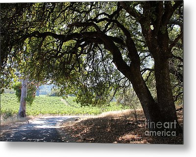 Landscape At The Jack London Ranch In The Sonoma California Wine Country 5d24583 Metal Print by Wingsdomain Art and Photography