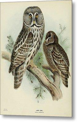 Lapp Owl Metal Print by J G Keulemans