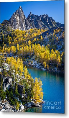 Larches At Perfection Lake Metal Print by Inge Johnsson