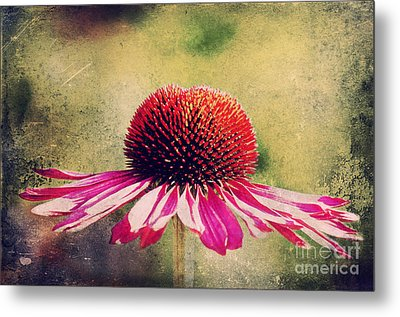 Last Summer Feeling Metal Print by Angela Doelling AD DESIGN Photo and PhotoArt