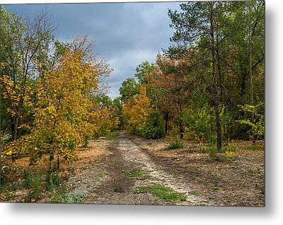 Late Autumn Metal Print by Svetlana Sewell