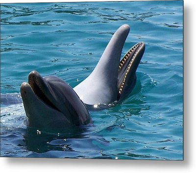 Laughing Dolphins Metal Print by Noreen HaCohen
