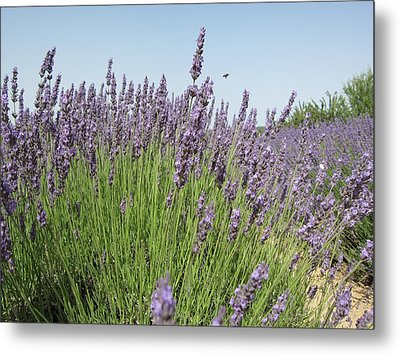 Lavender And The Bee Metal Print by Pema Hou