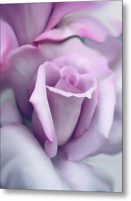 Lavender Rose Flower Portrait Metal Print by Jennie Marie Schell