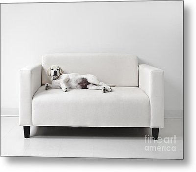 Lazy Dog On The Sofa Metal Print by Diane Diederich