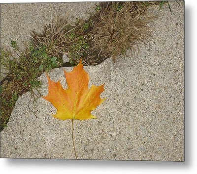 Leaf On Sidewalk Metal Print by David Fiske