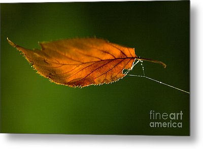 Leaf On Spiderwebstring Metal Print by Iris Richardson