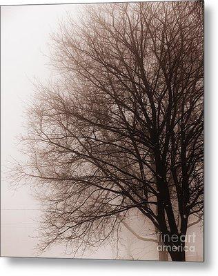 Leafless Tree In Fog Metal Print by Elena Elisseeva