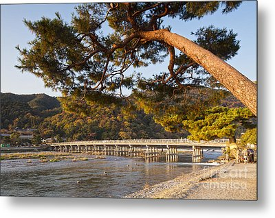 Leaning Pine Tree Arashiyama Kyoto Japan Metal Print by Colin and Linda McKie