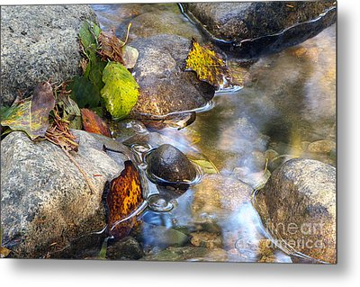 Leaves And Needles Metal Print by Sharon Talson