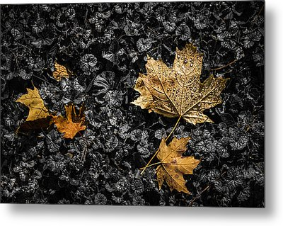 Leaves On Forest Floor Metal Print by Tom Mc Nemar