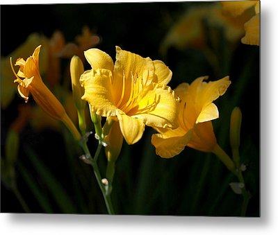 Lemon Yellow Daylilies Metal Print by Rona Black