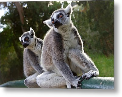 Lemurs Metal Print by Nadya Ost