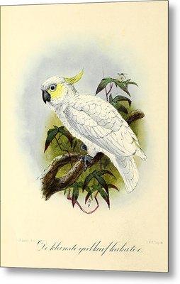 Lesser Cockatoo Metal Print by J G Keulemans