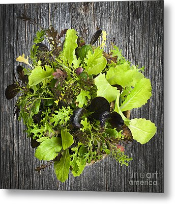 Lettuce Seedlings Metal Print by Elena Elisseeva