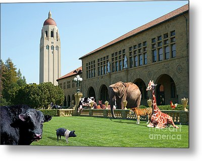 Life Down On The Farm Stanford University California Dsc685 Metal Print by Wingsdomain Art and Photography