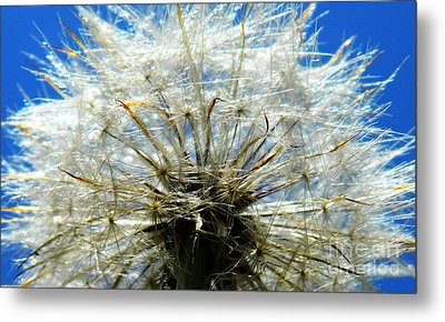 Life In Details Metal Print by Andrea Anderegg