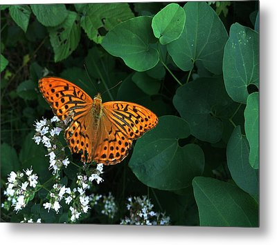 Life Metal Print by Lucy D