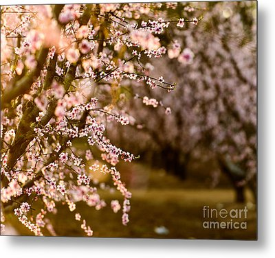 Light In The Orchard Metal Print by Terry Garvin