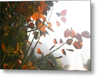 Light Metal Print by Lucy D