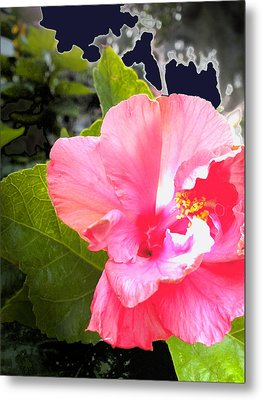 Lighted Flower Metal Print by Maureen Kyle