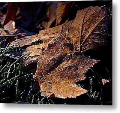 Lightly Frosted Metal Print by Rona Black
