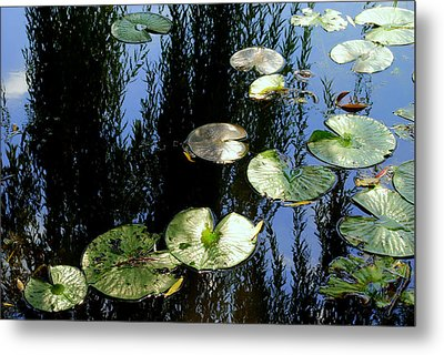 Lilly Pad Reflection Metal Print by Frozen in Time Fine Art Photography
