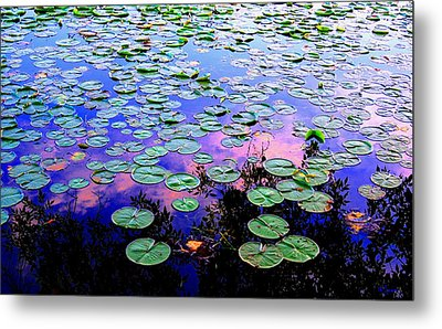 Lilly Pad Sunset Metal Print by Wendell Lowe