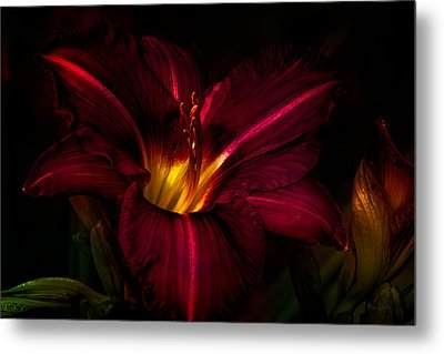 Lily Number Nine Metal Print by Bob Orsillo