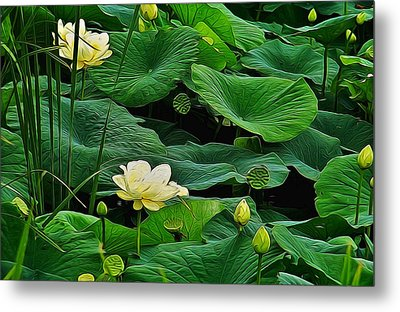 Lily Pond Metal Print by Julie Grace