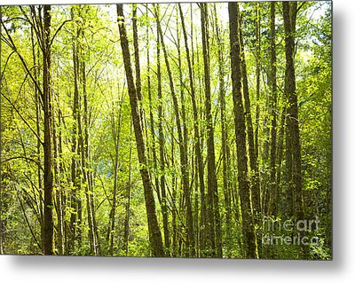 Lime Green Trees Metal Print by Graham Foulkes