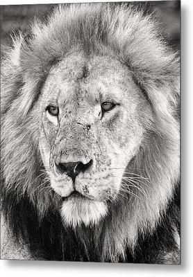 Lion King Metal Print by Adam Romanowicz