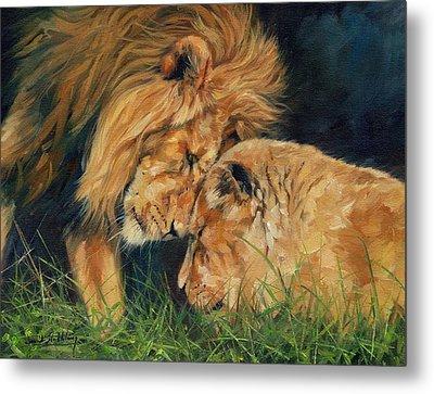 Lion  Love Metal Print by David Stribbling