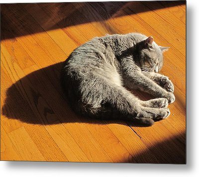 Lit Lounging Lucy Metal Print by Guy Ricketts