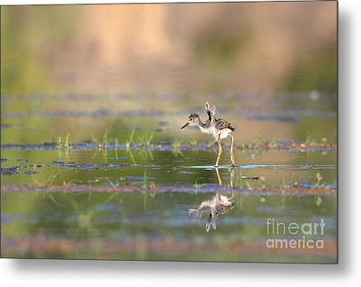 Little Flaps Metal Print by Ruth Jolly