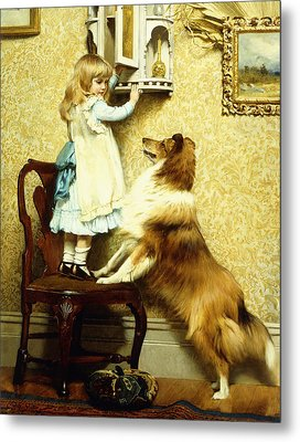 Little Girl And Her Sheltie Metal Print by Charles Burton Barber