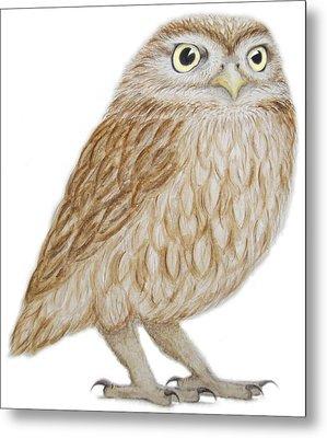 Little Owl Metal Print by Ele Grafton