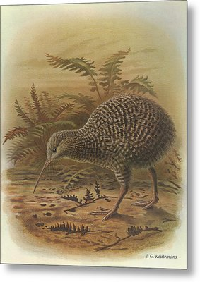 Little Spotted Kiwi Metal Print by J G Keulemans