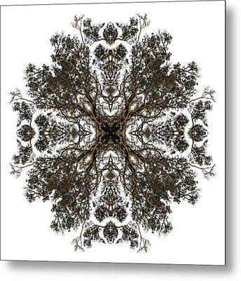 Live Oak Lace Metal Print by Debra and Dave Vanderlaan