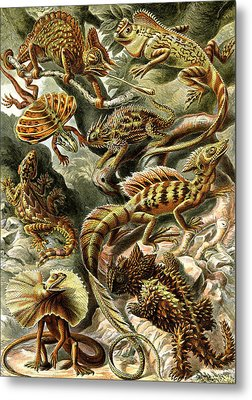 Lizards Lizards And More Lizards Metal Print by Unknown