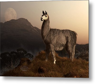 Llama Dawn Metal Print by Daniel Eskridge