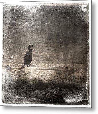 Lone Cormorant Metal Print by Carol Leigh