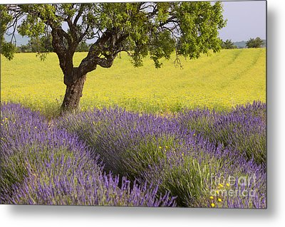 Lone Tree In Provence Metal Print by Brian Jannsen